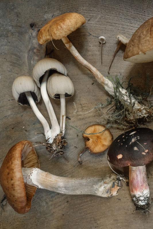 Concentration de jus de champignons
